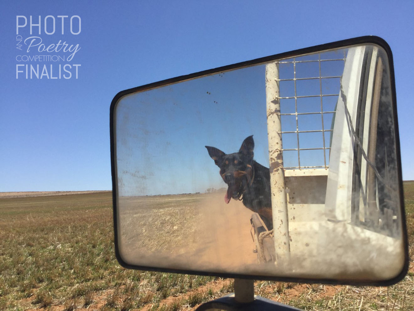 Mac - This picture shows Mac, our oldest dog, living his best life with the wind in his ears, tongue out, in his favourite place to be—the back of the ute going down a remote dirt road. RHIANNA O'BRIEN, Speed, VIC