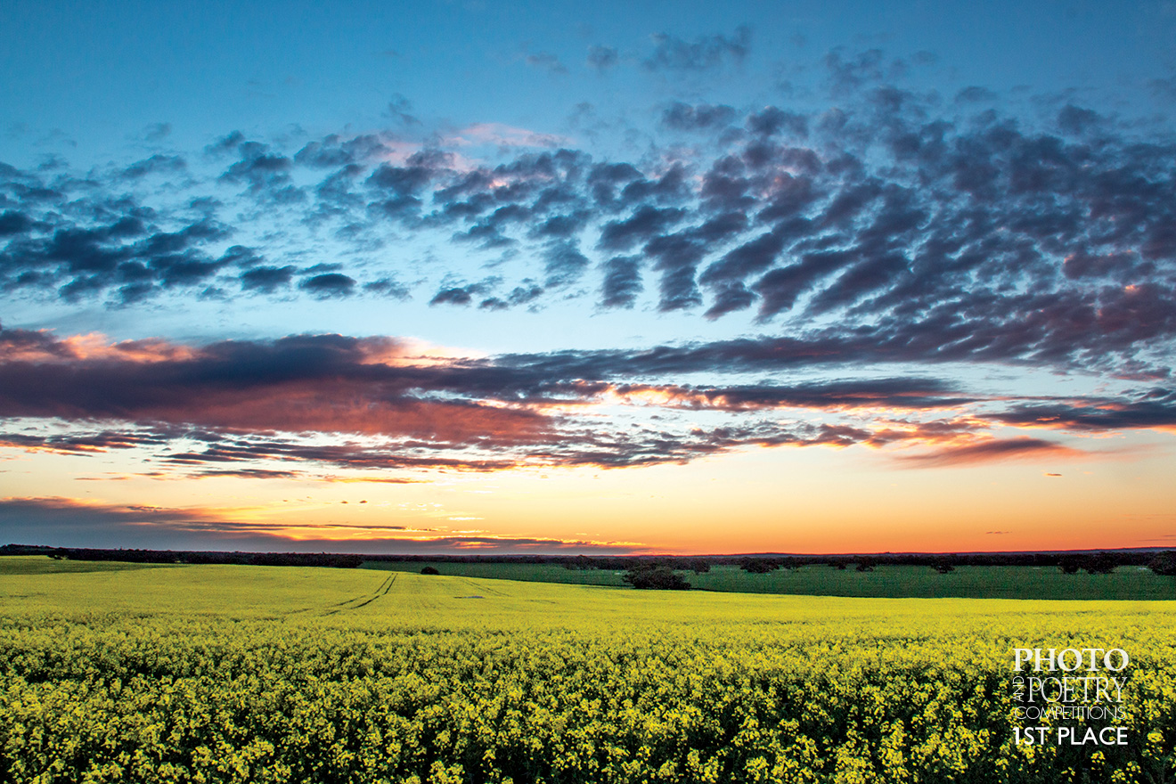 Mallee sunset over a canola paddock
