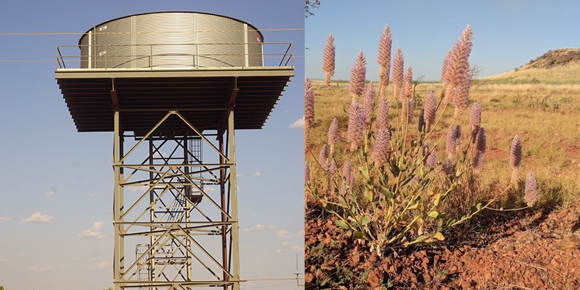 Left - Community water tower. Right - Mulla mulla – the flower of the Pilbara