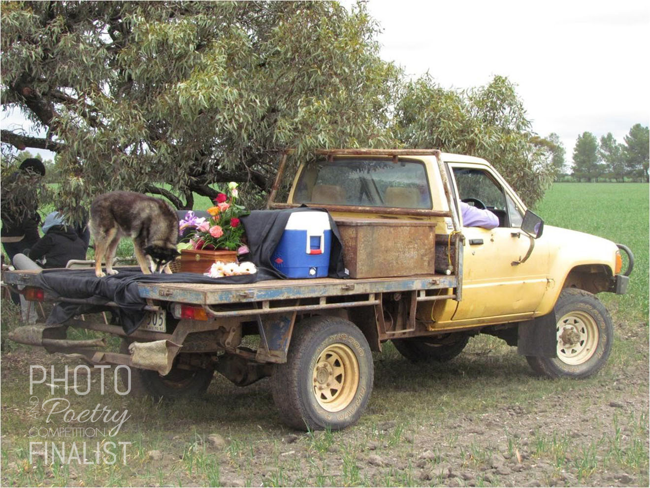Ute at Willenabrina - The photo of the ute is when we scattered my aunt's ashes at the farm my mother grew up on in Willenabrina (just outside Warracknabeal). The dog was my aunt's dog, the ashes were in the box and the drinks were in the esky. JULIANNE BRYCE, Melbourne, VIC