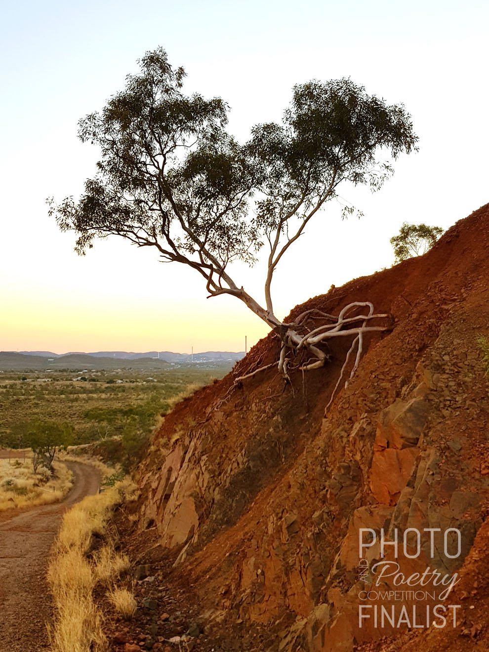 Telstra Hill, Mount Isa - Life finds a way, just hang on. CARMEN GOODGER, Mount Isa, QLD