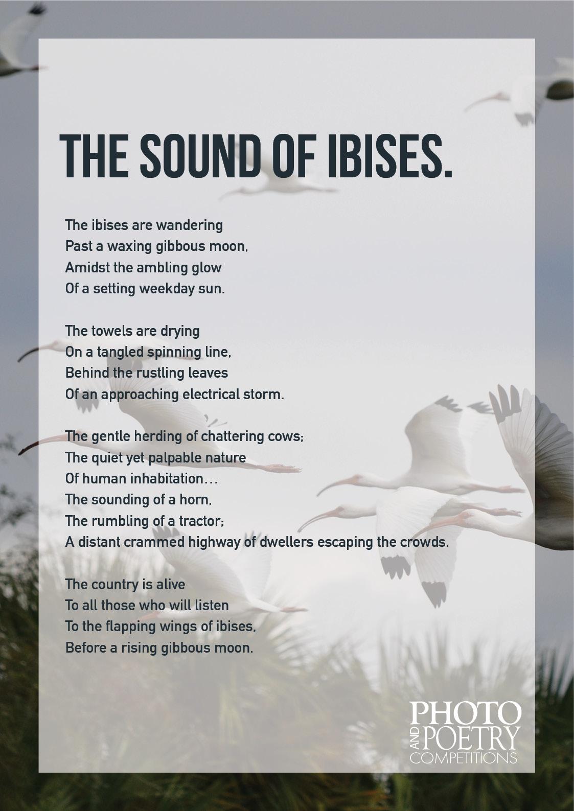 TristanKelly - The Sound of Ibises